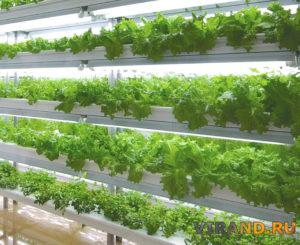 Гидропоника выращивание салата