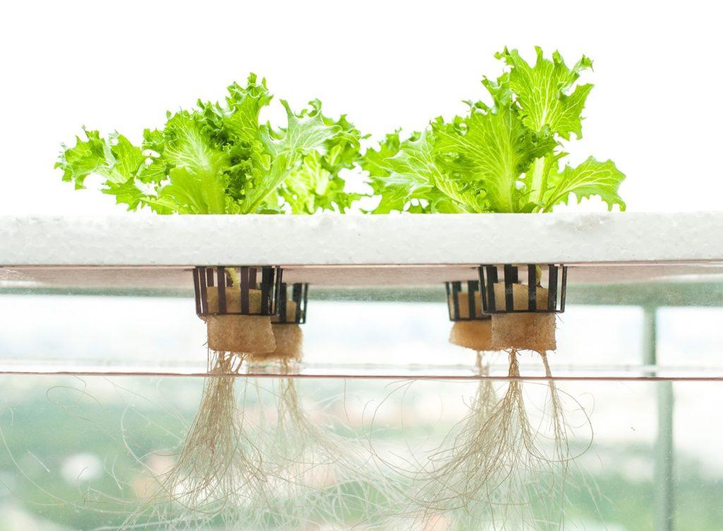 Выращивание гидропоники