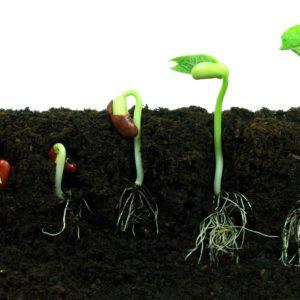 Проращивание семян VIRAND