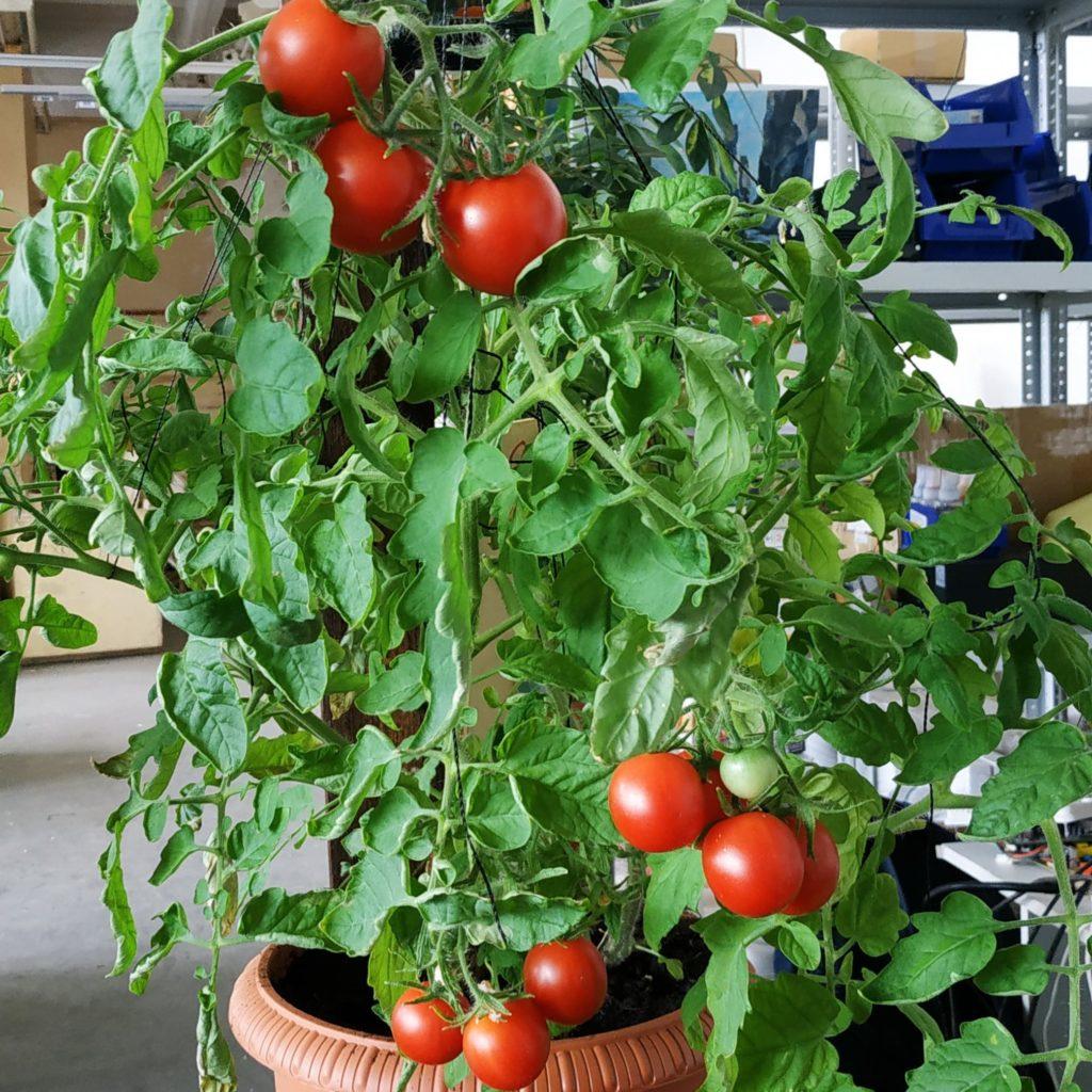 Фитолампа для растений VIRAND PHOTON 100 Вт