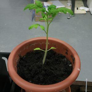 Фитолампа для растений VIRAND PHOTON 50 Вт